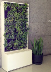 Promoting wellness, space beautification and a greener McGill with The Green Wall.