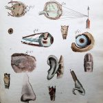 Figure 3 Studying the senses, from Ducrot's Cahier d'histoire naturelle, 1835-1837.