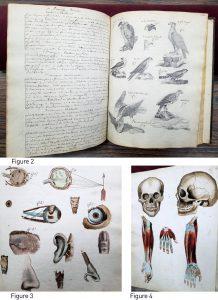 Figure 2.Oiseaux de proie. Figure 3. L'étude des senses. Figure 4. Crâne et avant-bras. Cahier d'histoire naturelle de Ducrot (1835-1837).