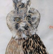 owl from Dionision Minaggio's Feather Book