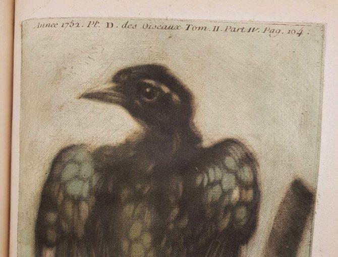 Bird from Gautier Dagoty. Observations sur l'histoire naturelle, sur la physique et sur la peinture … Paris, 1752.