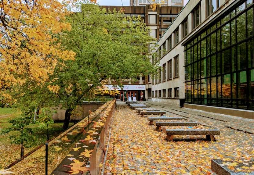 McLennan-Redpath Terrace covered in orange fallen leaves.