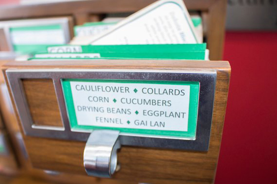 Close-up of card catalog filled with seeds for vegetables as part of the Mac Campus Seed Library.